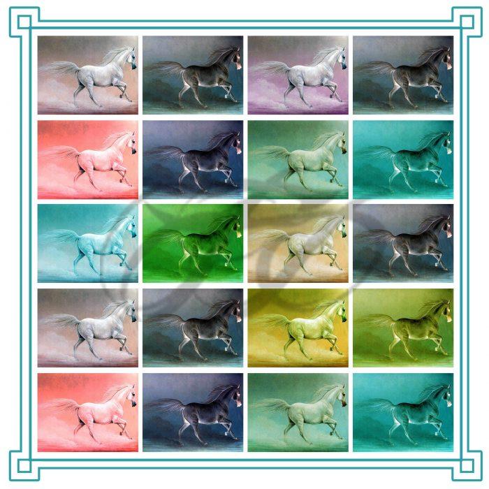 Coloured-Horses-1